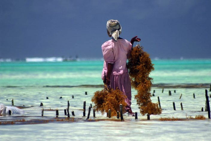 """Vom Tor der Wohnanlage sind es nur 250 m zum Traumstrand """"Diani Beach"""" mit seinem schneeweißen Sand und dem türkisfarbenen Wasser des Indischen Ozeans - Villa-Kuishi - Diani Beach - Kenia - Ihr exklusives Ferienhaus unter der Sonne Ostafrikas"""