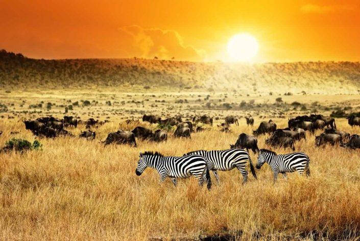 Zebras und Antilopen im Sonnenuntergang - Villa-Kuishi - Diani Beach - Kenia - Ihr exklusives Ferienhaus unter der Sonne Ostafrikas